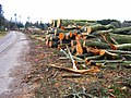 Tree felling at Drum Castle - geograph.org.uk - 1021244.jpg