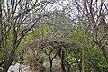 Trees (4514522209).jpg
