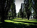 Trees in ANU Canberra (2845107309).jpg