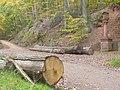 Trierer Stadtwald am Schusterskreuz - geo.hlipp.de - 14558.jpg