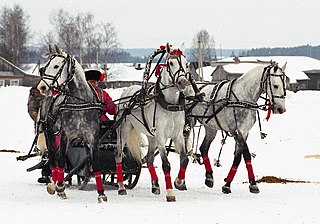 Troika (driving) carriage pulled by three beasts of burden