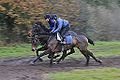 Two Horses Working On The Gallops (8236263716).jpg