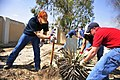 US Navy 090415-N-4750W-045 Aviation Ordnanceman 1st Class Jimmy Heflin, Aviation Support Equipment Technician 2nd Class Sanah Perkins and Lt. Carl Muehler remove a plant in a local cemetery.jpg