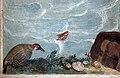 Ulisse giocchi, San Francesco di Paola attraversa lo stretto di Messina sul suo mantello, 1605, 05 uccello e conchiglie.jpg