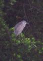 Unknownbird.png