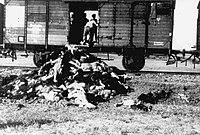 VICTIMS OF IASI POGROM.jpg
