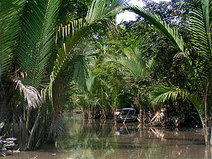 Mekong River Delta, Cần Thơ, Vietnam.