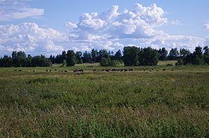 Tartu County - Image: Veised Aardla poldril 2013
