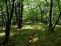 Velký Hornek, les.jpg