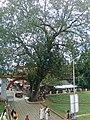 VelloorKunnam Mahadeva Temple Muvattupuzha - panoramio - maheshmm007 (2).jpg