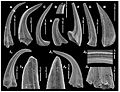 Venomous conodonts.jpg