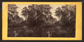 View near Hilton Head, S.C, from Robert N. Dennis collection of stereoscopic views.png