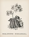 Vintage illustrations by Benjamin Fawcett for Shirley Hibberd digitally enhanced by rawpixel 69.jpg