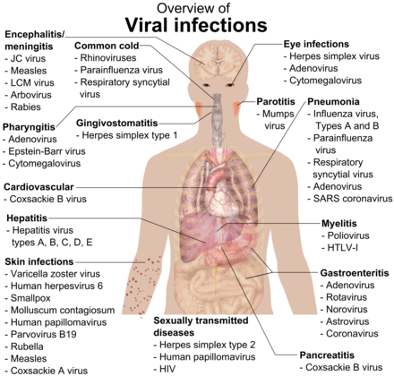 Overview of the main types of viral infection and the most notable species involved Viral infections and involved species.png