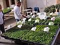 Vivaces couvre-sol Foire aux fleurs à Beaumes-de-Venise.jpg