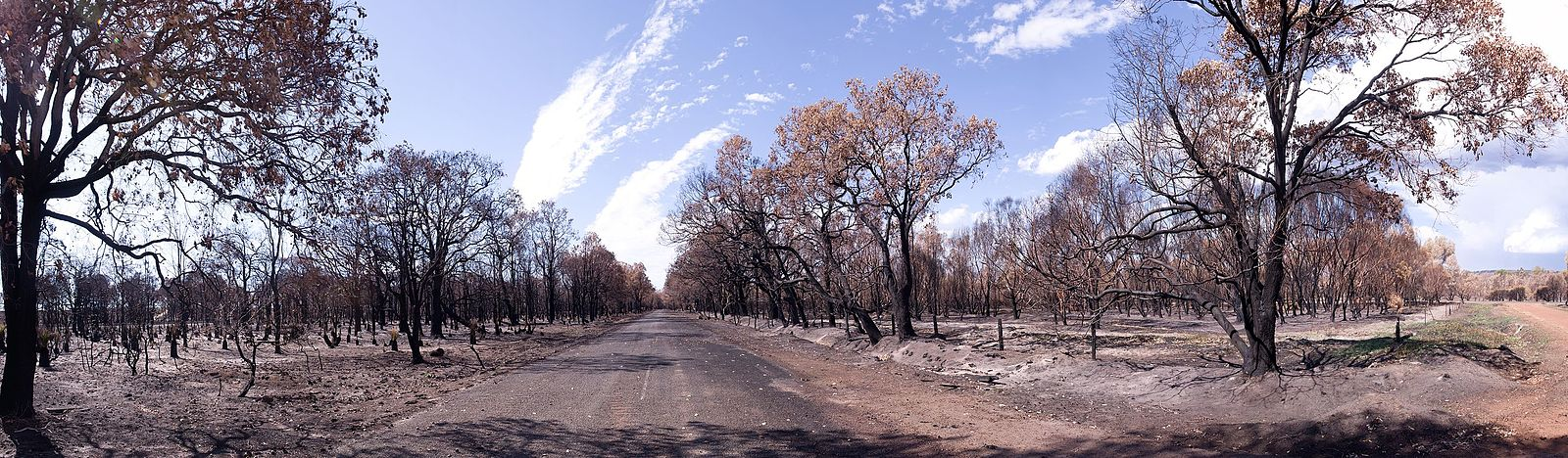 a central road leading nto the distance with blackened remains of bush land following a fire