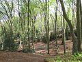 Wald am Neandersteig bei Essen-Kettwig.jpg