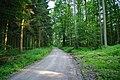 Waldweg - geo.hlipp.de - 11438.jpg