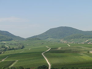 Palatinate (region) - Typical vineyard landscape in front of the Palatinate Forest