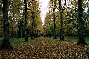 Westonbirt Arboretum - A tree-lined avenue at Westonbirt