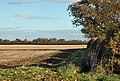 Wheatfield north of Leconfield - geograph.org.uk - 1042510.jpg