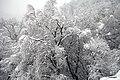 Wiki Loves Folklore, seasonal event, Winter.jpg