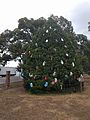 Winter Park Christmas Tree Number 3 (31541359636).jpg