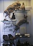 Witchcraft exhibit (Moyse's Hall, Bury St Edmunds).jpg