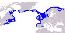 Distribución del pez lobo