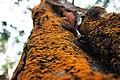 World of tree mosses.jpg