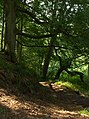 Wreay Woods - geograph.org.uk - 196336.jpg