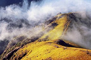 Wugong Mountains - High altitude meadows