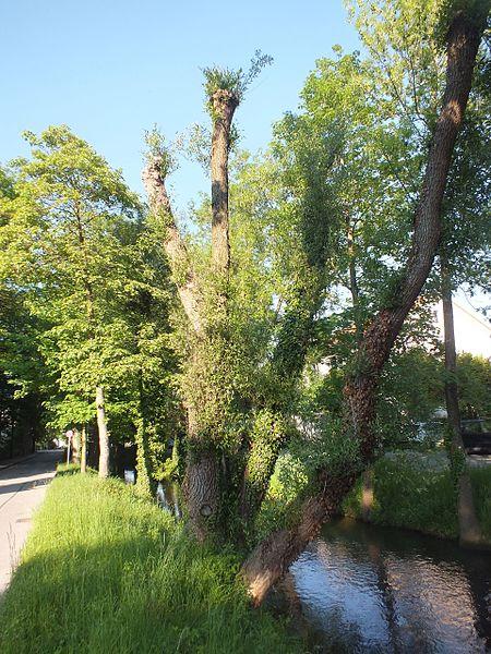 File:Wzwz dachau holzgartenkanal f.jpg