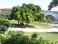 Zagreb Tomislav square00418.JPG
