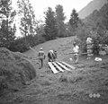 "Zahouc, Dromla nad Čezsočo. Vol s ""senmi"" za prevažanje sena v hribovitih senožetih 1952.jpg"