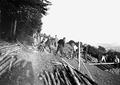 Zimmerleute beim Vorbereiten von Pfählen für den Schützengrabenbau - CH-BAR - 3240113.tif