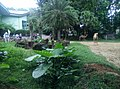 Zoo Negara Malaysia (National Zoo) (1).jpg