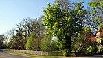 Zwei Linden und zwei Kastanien.jpg