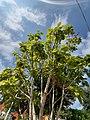 Árbol a las afueras de la misión en Landa de Matamoros en Querétaro.jpg