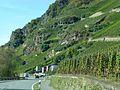 Ürzig – Kletterweg in steilen Weinbergslagen - panoramio.jpg