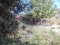 Ρέμα του Κοκκιναρά - panoramio (1).jpg