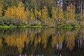Березки (озеро Моховое).jpg