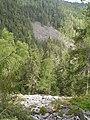 Ботанічна пам'ятка Горган. Горганське лісництво.jpg