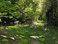 Вилейский лес - panoramio.jpg
