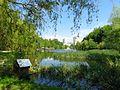 Голосіївський парк IMG 9644.jpg