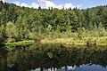 Дзеркало Журавлиного озера.jpg