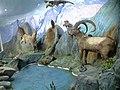 Животный мир Таджикистана 1 - националный музей Таджикистана.jpg