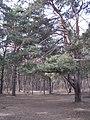Жулебинский заказник 02.jpg