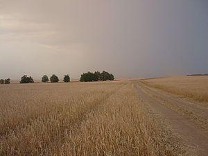 Kaybitsky District - Grain field, Kaybitsky District