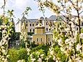 Квітуча вишня у Вишнівці та Воскресенська церква P1620013.jpg
